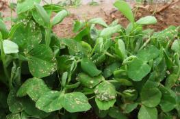 الزراعة تكشف عن خسائر المزارعين من مبيدات الاحتلال