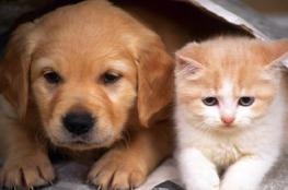 القطط والكلاب في أمريكا تستهلك خمس الطعام!