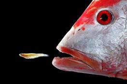 كيف تأكل الأسماك تحت الماء دون أن تختنق؟