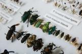 ثروة بقيمة 10 ملايين دولار من الحشرات!
