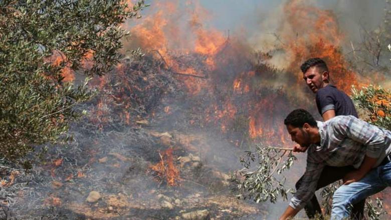 مستوطنون يحرقون نحو 1500 شجرة جنوب نابلس