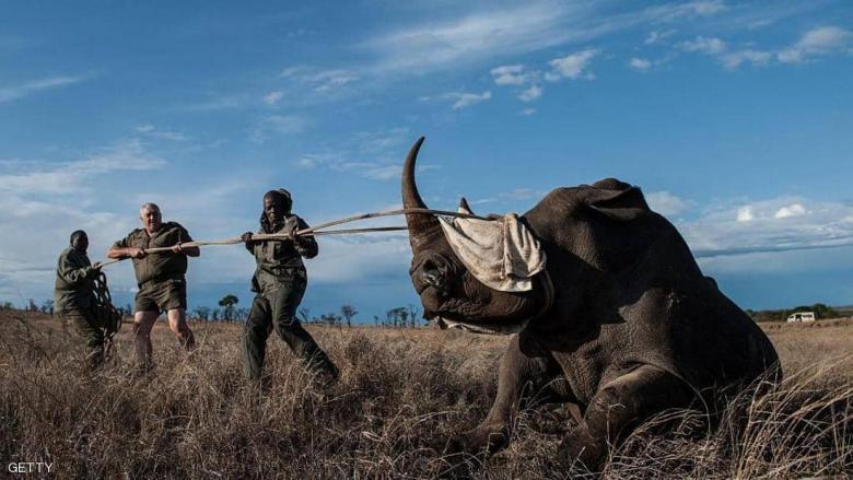 صياد حاول قتل وحيد قرن.. فلم يتبق منه سوى جمجمته وسرواله