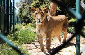 حيوانات تستعيد عافيتها في محمية طبيعية بالأردن جلبت من غزة وسوريا