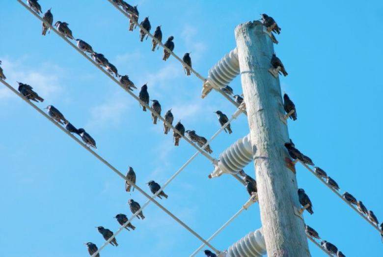 لمَ لا تُصعق الطيور التي تقف على أسلاك الكهرباء ؟
