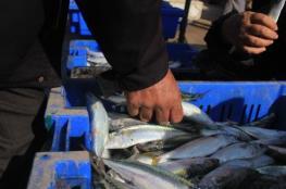 الزراعة بغزة تمنع استيراد أصناف أسماك من مصر