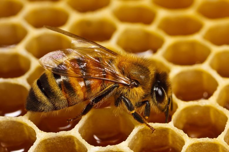خبير بيئي: دراسه عالمية تؤكد وجود مبيدات كيميائية في عسل النحل