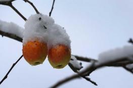 فصل الشتاء.. نمط غذائي مختلف