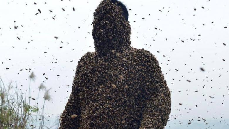 يجمع العسل ويأكله من النحل مباشرة