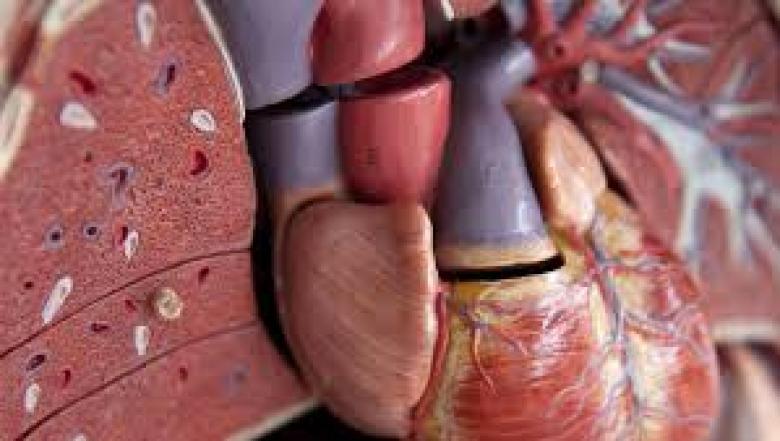 6 أعراض لالتهاب الكبد
