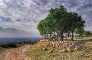 فصل الربيع في قرية برقا برام الله