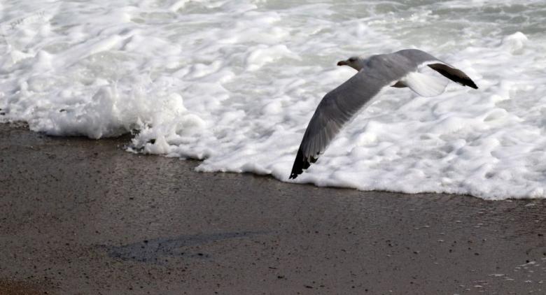 لأول مرة منذ 30 عاما... رصد وحش بحري نادر قبالة السواحل الأمريكية