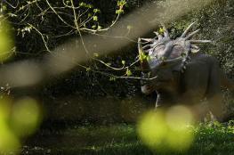 اكتشاف حفرية كائن قريب للديناصورات لكن بشكل مختلف