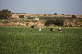 الاحتلال يطلق النار على المزارعين وسط وجنوب القطاع