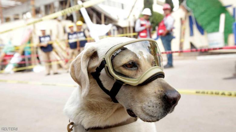 كلبة تسطر بطولات في إنقاذ ضحايا الكوارث