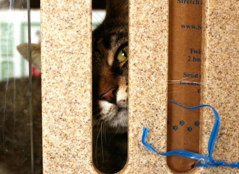 واشنطن توظف قططا للقضاء على الجرذان.. وهذا هو الراتب