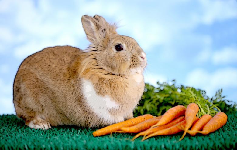 جزرةُ سنا كجك تخيفُ أرانبَ أفيخاي أدرعي