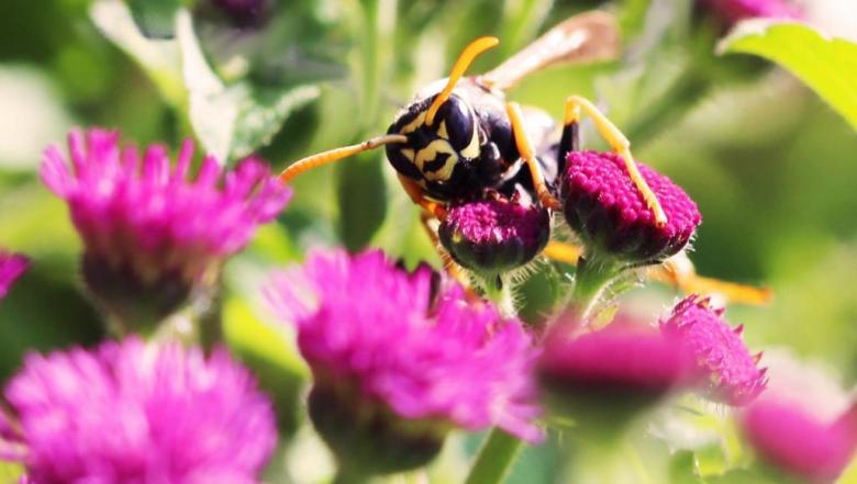 مفاجأة من عالم الحشرات.. يمكن للدبابير أن تفكر بطريقة منطقية