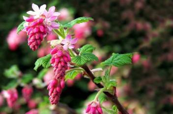 حكمة صينية : ازرع الورود واستغل الثقوب