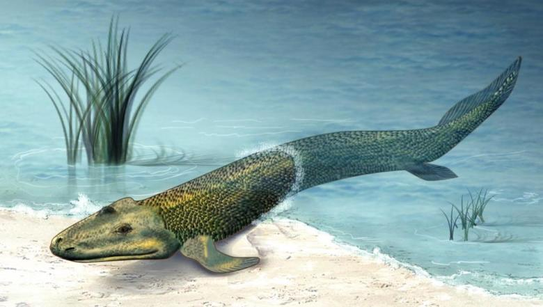 كيف تطورت زعانف بعض أسماك العصر الديفوني إلى أطراف؟