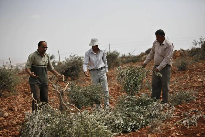الاحتلال يقتلع عشرات أشجار الزيتون ويهدم 4 آبار في طوباس