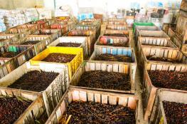 بلدية خان يونس تتلف 83 طن أغذية فاسدة
