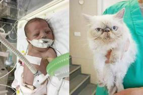 أطفال غزة يموتون والقطط تعيش وتعالج بالخارج