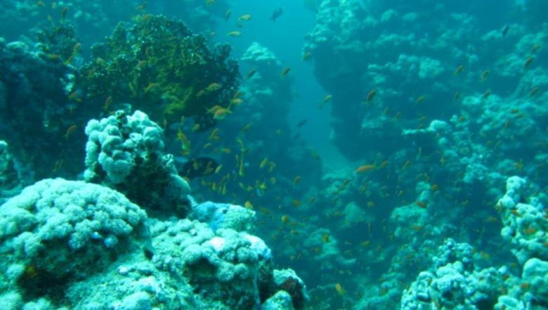 التذبذبات المناخية تخفض حرارة مياه البحر الأحمر