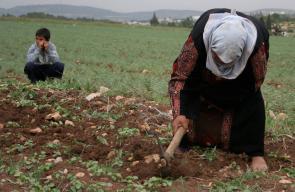 الأم الفلسطينيه.... امرأة تعانق المجد