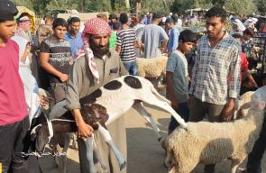 سوق الأضاحي في قطاع غزة