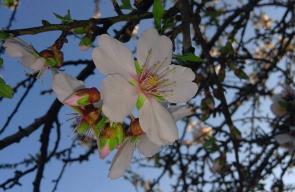 زهور الأشجار في خانيونس