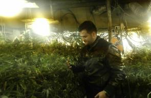 العثور على مشتل للمخدرات جنوب الخليل