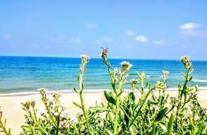 الطبيعة الشاطئية غرب مدينة غزة