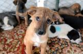 إعادة تأهيل أكثر من 10 آلاف حيوان ضال في أنقرة العام الماضي