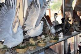 """جنين: ضبط كمية من طيور الحبش المهرّبة من """"إسرائيل"""""""