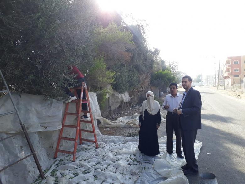 رئيس بلدية الزوايدة يقوم بجولة تفقدية لمزارعي الزيتون