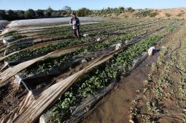 منحة مالية لمتضرري الدفيئات الزراعية بقطاع غزة