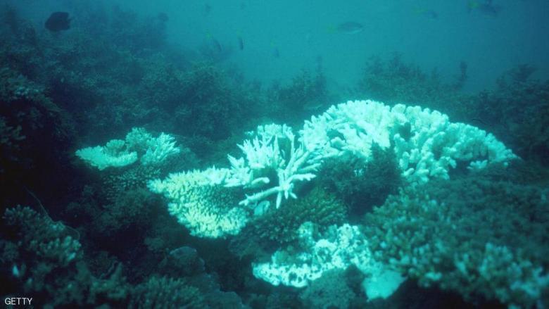 """موجات الحر تنذر بـ""""كارثة"""" للشعاب المرجانية"""