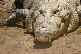 في الهند.. أراد الاغتسال في النهر فابتلعه تمساح