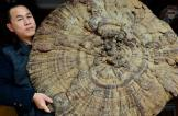 اكتشاف أكبر فطر في الصين