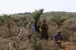 مستوطنون يقطعون أشجارا في الخليل