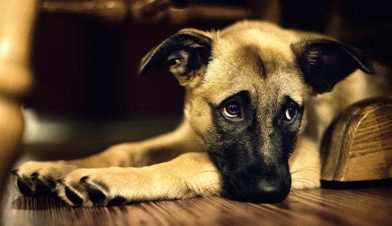 الكلب الأعرج الذي أنقذ رضيعًا دُفن حيًا