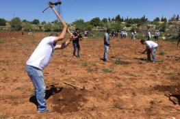 نشطاء يزرعون أراضٍ مهددة بالمصادرة في الخليل وبيت لحم