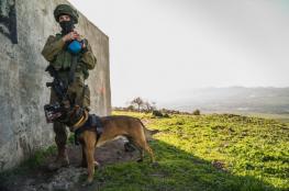 تعرفوا على وحدة الكلاب المدرّبة في جيش الاحتلال