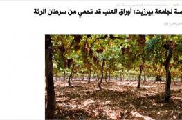 دراسة فلسطينية: ورق العنب يكبح سرطان الرئة