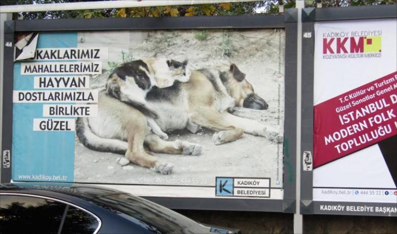 برد الشتاء يكشف رفق الأتراك بالحيوان