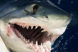 """أسماك القرش """"تعض"""" 3 أشخاص في نفس المكان خلال يوم"""