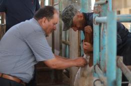 الزراعة تنفذ جولات ميدانية على مزارع الأبقار والأغنام في شمال غزة