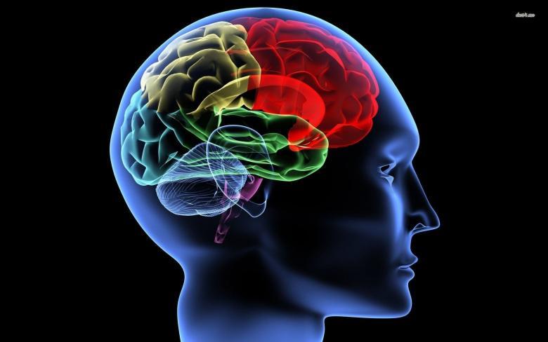 الكشف عن جهاز يربط مخ البشر بشريحة إلكترونية
