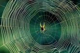 خُيوطُ العنكبُوت