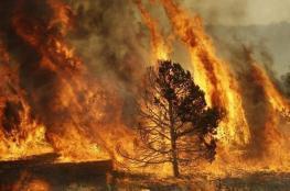 حريق كبير يلتهم 1500 شجرة زيتون جنوب جنين